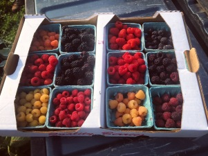 Berry varieties from the Geneva Experiment Station.